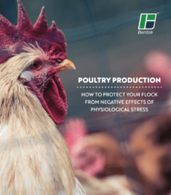 Poultry Production - How to Protect Your Flock