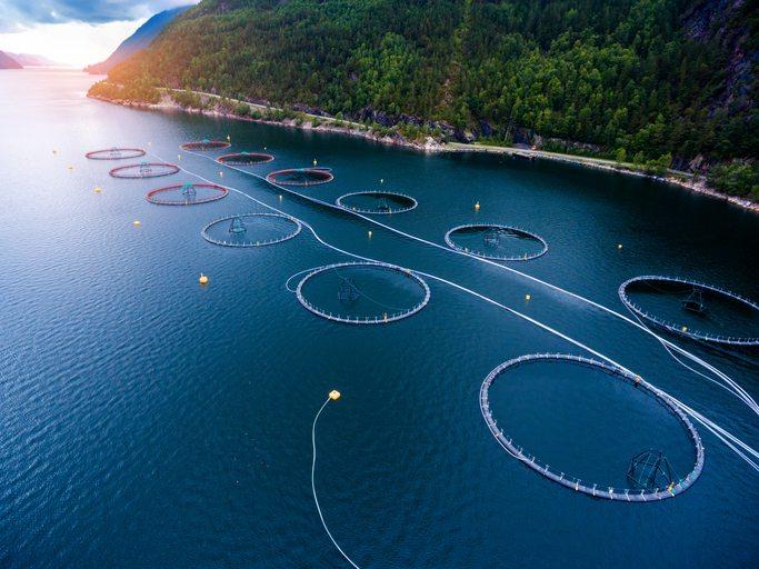Aquaculture trends coming in 2018