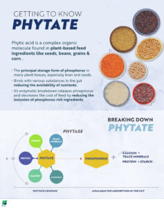 Phytic acid is a complex organic molecule found in plant-based feed ingredients like seeds, beans, grains and corn